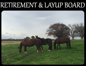 Equine Retirement and Layup Boarding